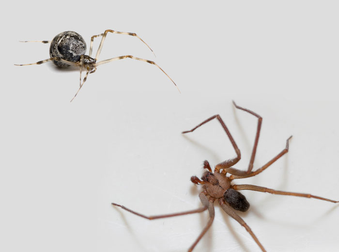 spider control Sandusky Ohio vacation rentals