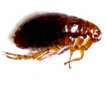 Flea exterminators Sandusky Ohio