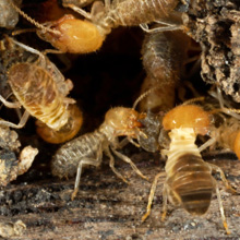 Sandusky termite exterminators home or business